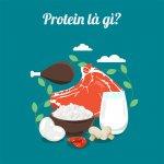 protein la gi